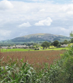 Hincaster Traiway - A safe place to walk, cycle, horse ride in Cumbria